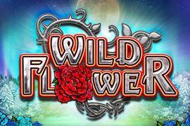 Wild Flower, uma slot Online da Big Time Gaming